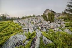 Landschaft, sonnige Dämmerung auf einem Gebiet Stockbilder