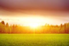 Landschaft, sonnige Dämmerung auf einem Gebiet Feld des Grases und des bunten Sonnenuntergangs stockbilder