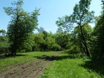 Landschaft, Straße durch den Wald Lizenzfreie Stockfotos