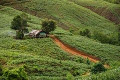 Landschaft in Thailand Stockbilder