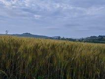 Landschaft, Toskana Val D'Orcia Lizenzfreies Stockfoto