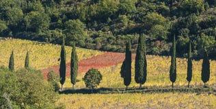 Landschaft um die romanische Abtei von Sant Antimo ist ein ehemaliges Benediktinerkloster im comune von Montalcino Lizenzfreie Stockfotos