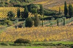 Landschaft um die romanische Abtei von Sant Antimo ist ein ehemaliges Benediktinerkloster im comune von Montalcino Stockfoto
