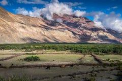 Landschaft um Nubra-Tal in Ladakh, Indien Lizenzfreies Stockfoto