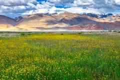 Landschaft um Tso Moriri See in Ladakh, Indien Stockbilder