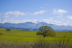 Landschaft und Felder Stockfoto