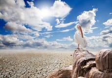 Landschaft und Pelikan Lizenzfreies Stockfoto