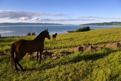 Landschaft und Pferde lizenzfreies stockbild