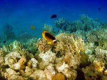 Landschaft unter Wasser stockfoto