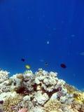 Landschaft unter Wasser lizenzfreie stockfotografie
