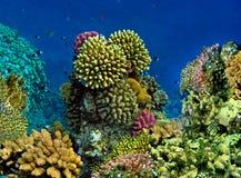 Landschaft unter Wasser lizenzfreies stockbild