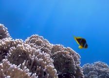 Landschaft unter Wasser lizenzfreie stockbilder