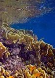 Landschaft unter Wasser stockbild