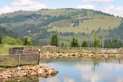 Landschaft Vatra Dornei Stockfoto