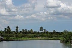 Landschaft vom Fluss und von Palme tropisch mit cloudscape Hintergrund Lizenzfreies Stockfoto