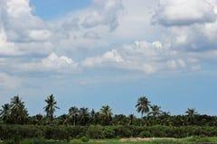 Landschaft vom Fluss und von Palme tropisch mit cloudscape Hintergrund Lizenzfreie Stockbilder