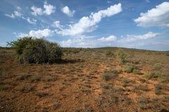 Landschaft von Addo Elephant National Park im August, Südafrika Stockbild