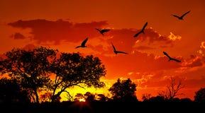 Landschaft von Afrika mit warmem Sonnenuntergang Stockfotografie