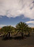 Landschaft von Antigua Stockfotografie