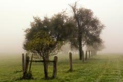 Landschaft von Bäumen und von Himmel Stockfotos