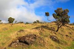 Landschaft von Bäumen und von felsigem Feld in Azoren stockfoto