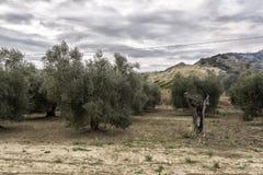 Landschaft von Basilikata-Landschaft Stockfotos