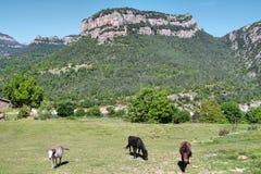 Landschaft von Bergen in Serra de Busa lizenzfreie stockfotografie