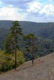Landschaft von bewaldeten Bergen Stockbilder