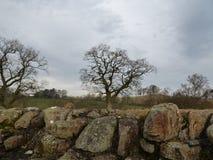 Landschaft von blattlosen Winter-Bäumen Stockfotos