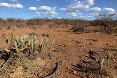 Landschaft von Caatinga in Brasilien Stockfotografie