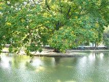 Landschaft von einem Teich und von großen Baum Lizenzfreie Stockfotos