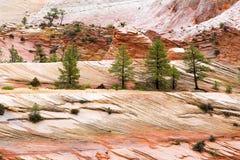 Landschaft von Farbfelsen in Zion NP stockfotos