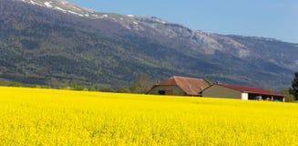 Landschaft von Feldern des Weizens und des Rapssamens im Hintergrund des Bergs Jura in Frankreich Lizenzfreies Stockbild