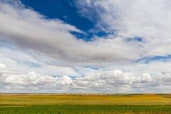 Landschaft von Feldern mit verschiedenen Ernten und breite Ansicht des Himmels Lizenzfreie Stockfotos