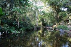 Landschaft von Fluss und von Baum Hintergrund und Beschaffenheit der Natur Lizenzfreie Stockfotografie