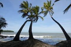 Landschaft von französischem Guyana lizenzfreie stockfotos