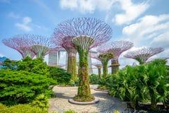 Landschaft von Gärten durch die Bucht in Singapur stockfotografie