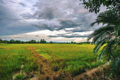 Landschaft von geernteten Feldern am Abend Stockbilder