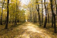 Landschaft von goldenen gelben Bäumen und von gefallenen Blättern stockfoto