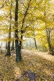 Landschaft von goldenen gelben Bäumen und von gefallenen Blättern lizenzfreie stockbilder