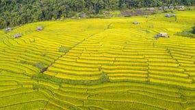 Landschaft von Goldreisfeldern stockfotos