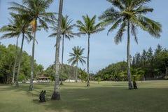 Landschaft von grünen Rasenfläche-und Kokosnuss-Bäumen lizenzfreie stockfotografie