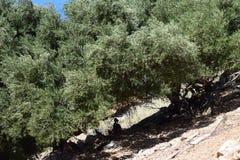 Landschaft von großem szenischem mit den Ziegen stehen im Schatten Lizenzfreie Stockfotografie
