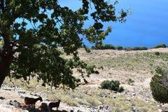 Landschaft von großem szenischem mit den Ziegen stehen im Schatten Lizenzfreie Stockfotos