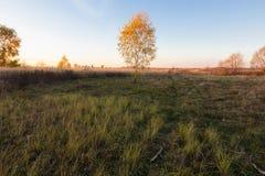 Landschaft von Herbstbäumen mit Gelbem und Orange verlässt auf dem Gebiet stockfoto