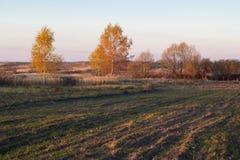 Landschaft von Herbstbäumen mit Gelbem und Orange verlässt auf dem Gebiet lizenzfreies stockfoto