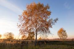 Landschaft von Herbstbäumen mit Gelbem und Orange verlässt auf dem Gebiet stockfotografie