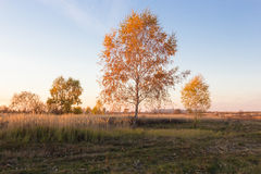 Landschaft von Herbstbäumen mit Gelbem und Orange verlässt auf dem Gebiet stockbilder
