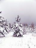 Landschaft von Kiefernwäldern Stockbild