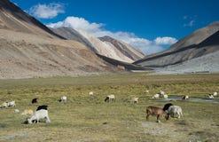 Landschaft von Ladakh lizenzfreie stockbilder